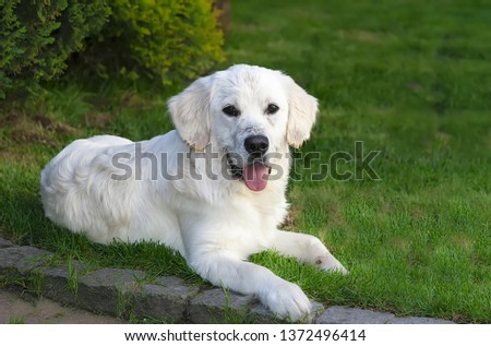 Young mammal dog sit on green grass in the park #1372496414