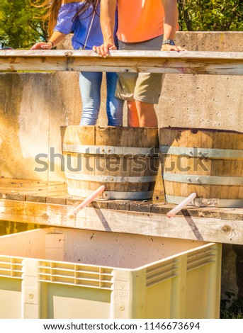 Young man and woman stomping grapes  standing in the same barrel during Grape Stomping Festival; fall in Missouri