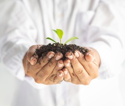 Young manHands hold protect Smallsprouttree plant in blacksoilon sunlight white background.Agricultureorganicfarmer,environmental day,new growth nurture care, sustainsave world spring concept