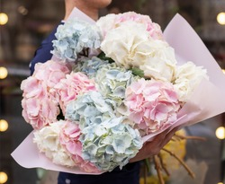 Young man holding a beautiful blossoming flower bouquet of fresh Hydrangea. A bunch of blue and pink hydrangeas. Blue and pink flowers of hydrangea close-up. Natural hydrangea flowers background.