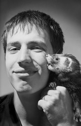 Young man holding beautiful ferret who bites his cheek