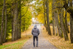 Young man in gray warm clothes slowly walking through alley of trees in yellow autumn day at park. Spending time alone in nature. Peaceful atmosphere. Back view.