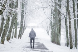 Young man in gray warm clothes walking through alley of trees in white snowy winter day at park after blizzard. Fresh first snow. Spending time alone in nature. Peaceful atmosphere. Back view.