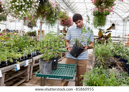 Young man looking for potted plants at a garden centre