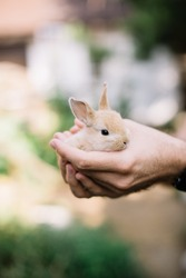 Young man's hand holding adorable fluffy little baby bunny rabbit, close up view