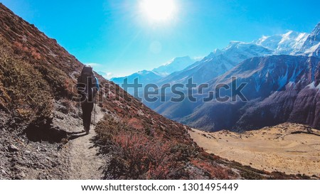 Young man walks on the trail, carries huge backpack, supports himself with sticks, Annapurna Circuit Trek, Nepal. Upper Shreekharka. Below Manang Valley. Dry grass. Other side of the gorge very raw.  #1301495449