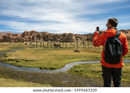 Young man with backpack at serene green landscape with alpacas and llamas, geological rock formations and blue sky on Altiplano, Andes of Bolivia