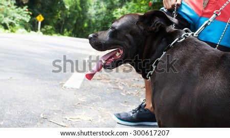 Young man with black dog running on a rural road during sunset at streets dry leaf