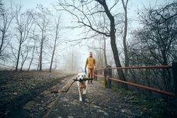Young man with his dog walking on sidewalk in public park in fog. Playful labrador retriever holding stick in mouth in frosty day.