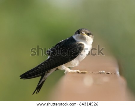 Young Martin alighted on metal bar, close-up