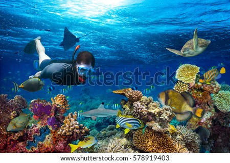young men snorkeling exploring underwater coral reef landscape background  in the deep blue ocean with colorful fish and marine life #578919403