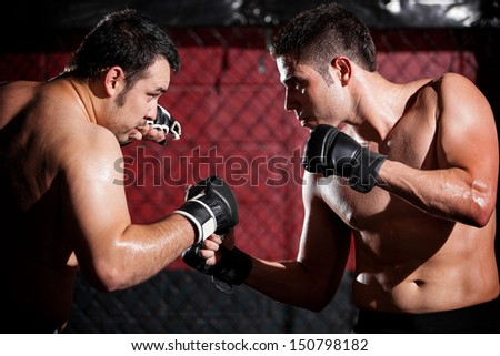 Young men wearing gloves and ready to begin a mixed martial arts fight in a fighting cage