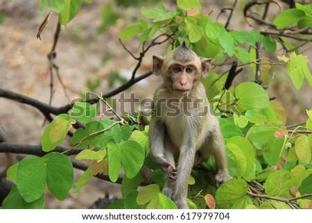 young monkey #617979704