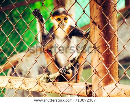 young monkey in a cage  it's...