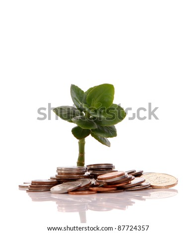 Young plant and coins isolated over white background