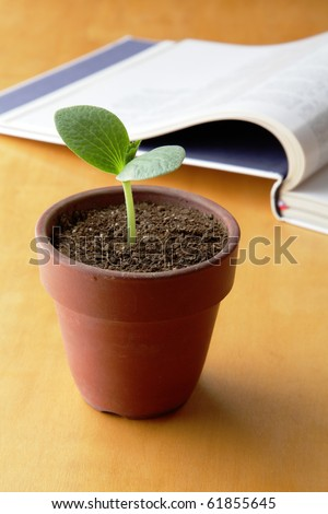 Young plant and open book
