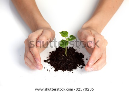 young plant cover their hands