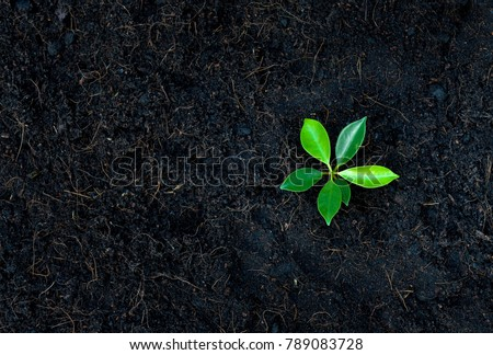 Young plant glowing from the soil - Top view