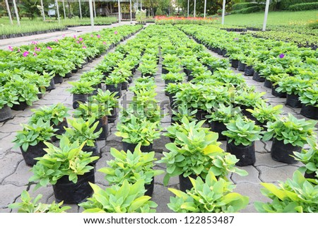 Young plant green house nursery garden before sold.