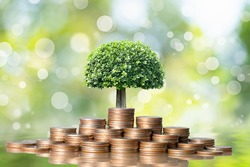 Young plant grow and coins stack, Pension fund, 401K, Passive income, Investment and retirement concept. savings and Business investment growth concept. Risk management.