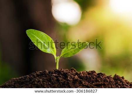 young plant grow and sunshine - Shutterstock ID 306186827