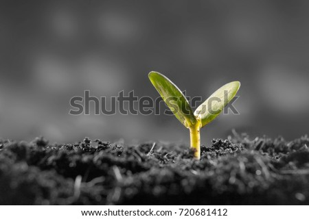 Young plant growing #720681412