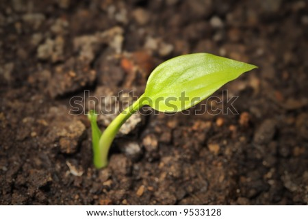 young plant growing from the ground