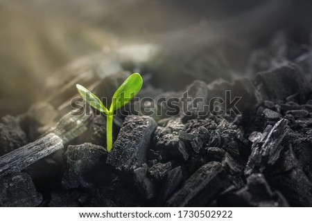 Young plant growing in black coal. Business revival concept. Сток-фото ©