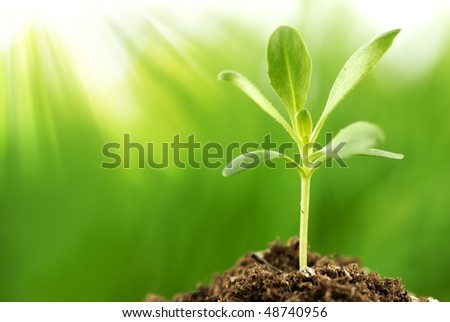 Young plant growing in sunshine(Shallow Dof)