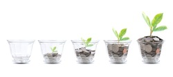 Young plant growing in the glass jars that have money coins isolate on white. savings and investment concept for growing success full
