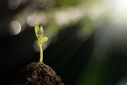 Young plant growing in the morning light and green bokeh background ,  new life growth ecology,Earth Day concept