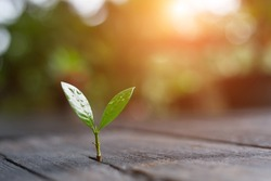 Young plant growing in the morning light with green nature bokeh background . New life growth ecology business financial concept.