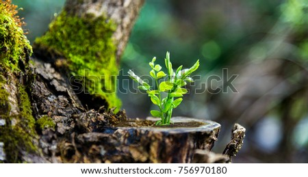 Young plant growing on dead stump