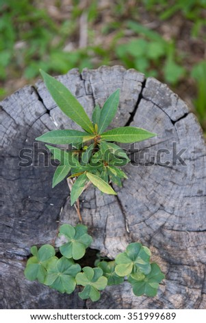 young plant growing on tree stump #351999689