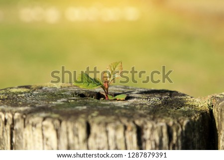 Young plant growing on tree stump with blurred green background. New life or environment symbolic concept. #1287879391