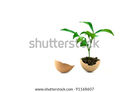 young plant in eggshell isolated on white background, conservation concept