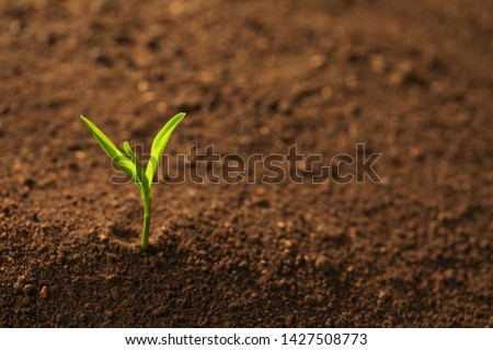 Young plant in fertile soil, space for text. Gardening time ストックフォト ©