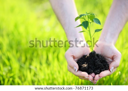Young plant in hand against green nature background. Shallow depth of field