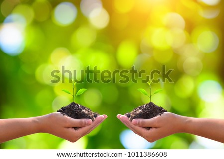 Young plant in hand.Seedling are growing in the soil with sunlight. /Wherever the tree is planted,everyone will benefit from it. The worldwide platform.