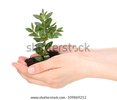 Young plant in hands isolated on white - stock photo
