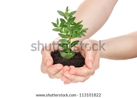 Young plant in hands isolated on white