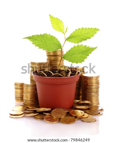 Young plant in pot with coins isolated on white. Ukrainian coins