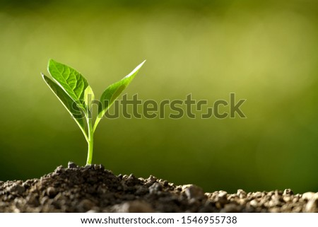 Young plant in the morning light growing out from soil ストックフォト ©