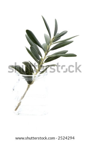 young plant in the water. olive