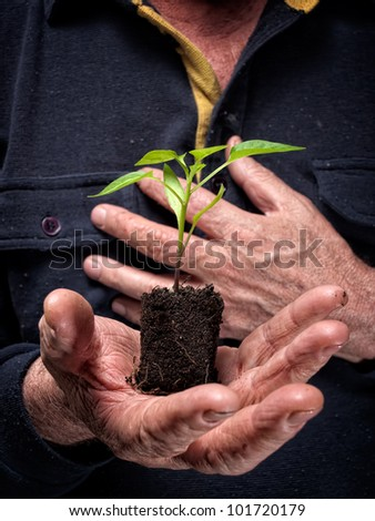 Young plant  is growing on a lump of soil in hands of an old farmer.
