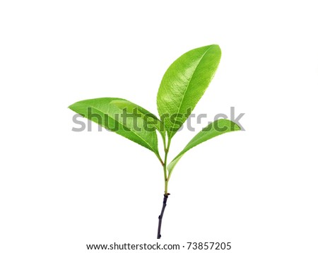 Young plant isolated on the white