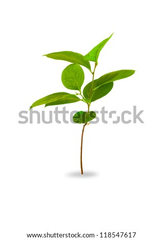 Young plant isolated on white #118547617