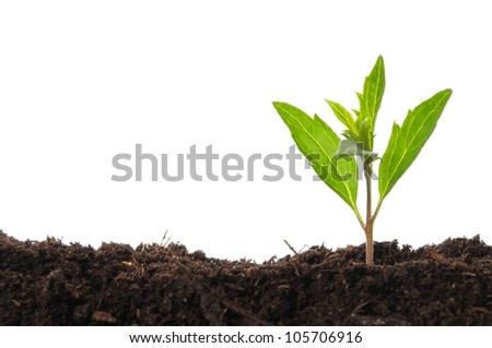 young plant isolated on white showing growth ecology or hope concept