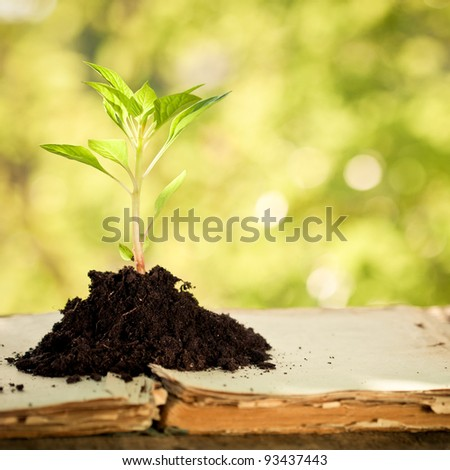 Young plant on old book against spring natural background. Ecology concept