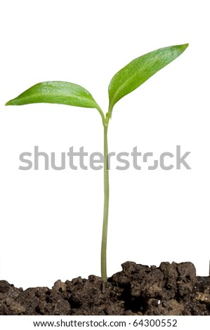 Young plant on the white backgrounds